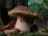 I funghi in Calabria